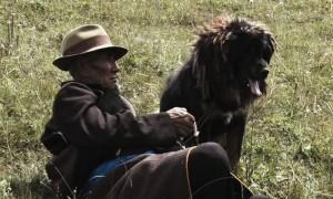 old_dog_3